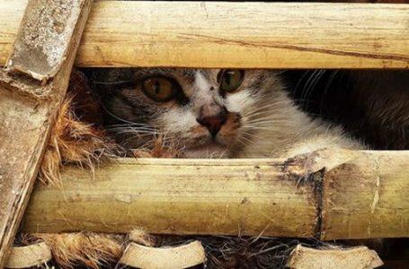 Büyük kedi katliamı!