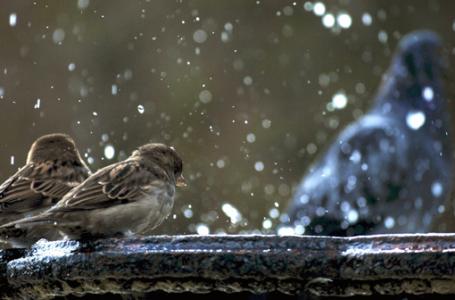 Üşümüş Kuşlar